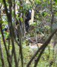 Entre unos cafetales, en San Lucas Tolimán, Sololá, fue hallado el cadáver de una menor que estaba desaparecida. (Foto Prensa Libre: Ángel Julajuj)