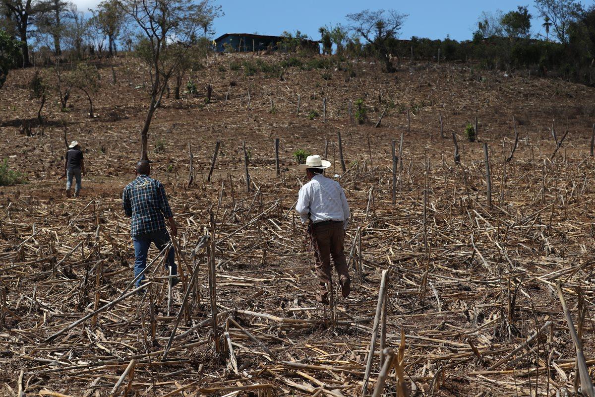 Cantón Valencia, Jutiapa, donde la sequía ha causado estragos. (Foto Prensa Libre: Esbin García)