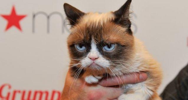La gata se volvió popular por el gesto distintivo con el que nació. (Foto Prensa Libre: Getty Images)