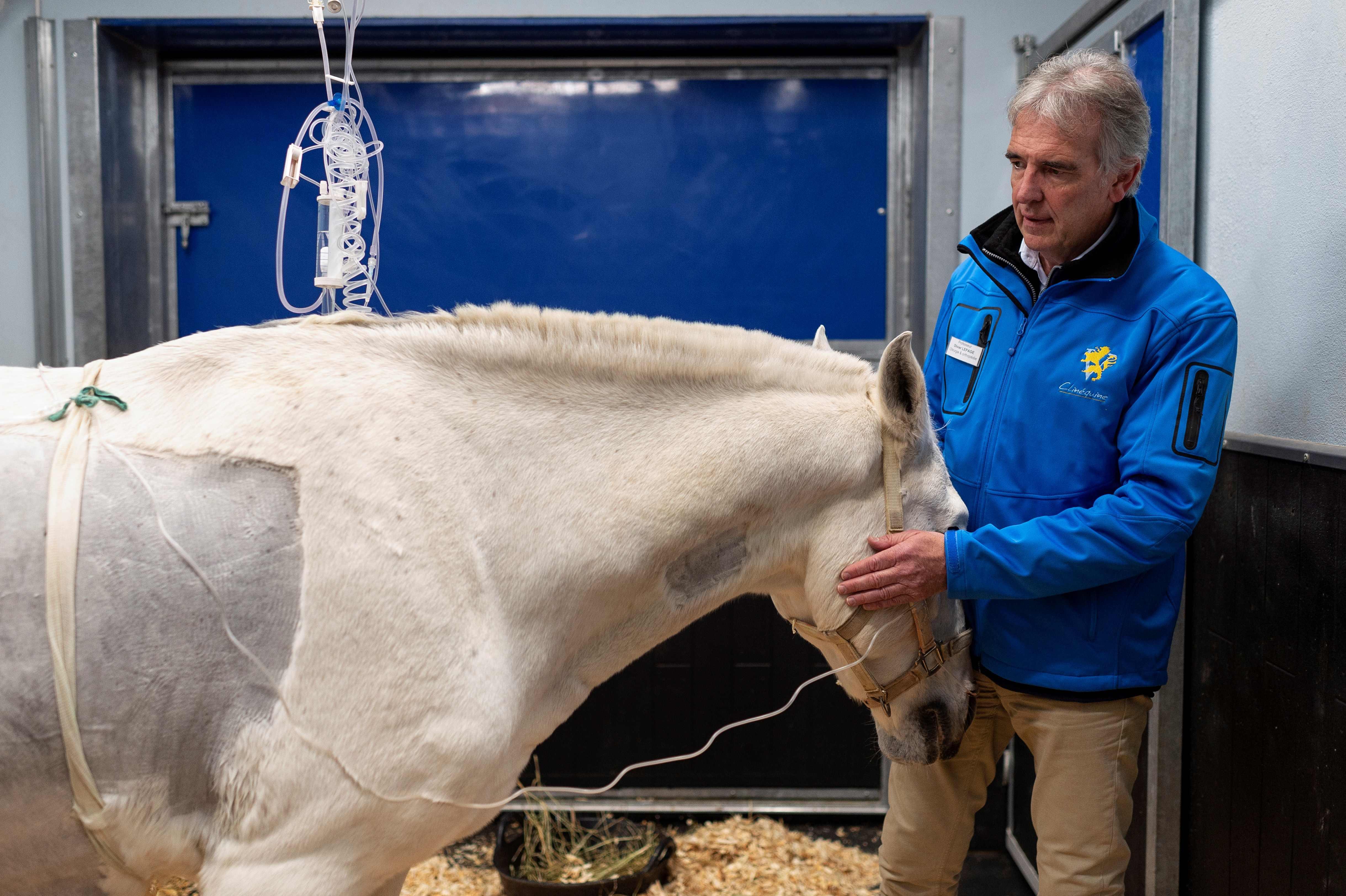 Algunos de los caballos tratados están valorados entre €3 y €4 millones. (Foto Prensa Libre: AFP)