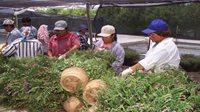 Guatemala recibió US25 millones diarios en remesas en 2018