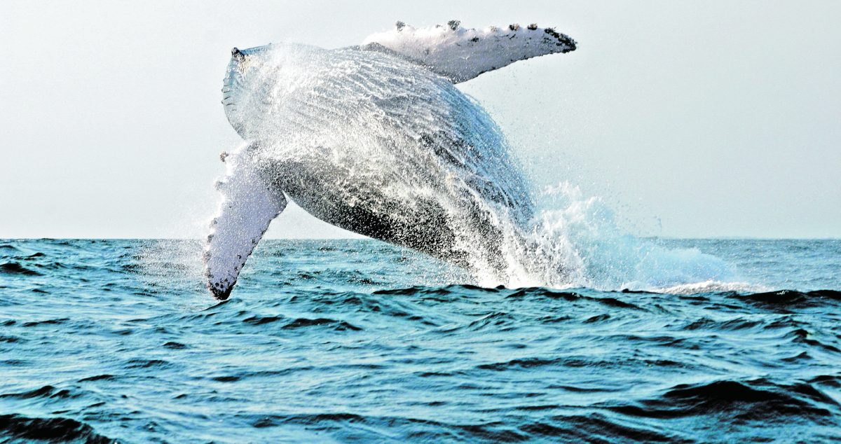 Disfrute del avistamiento de ballenas y delfines siguiendo estas recomendaciones