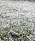 Terreno en Chulumal Tercero, Chichicastenango, Quiché, amaneció de blanco por las bajas temperaturas, (Foto Prensa Libre: Héctor Cordero).