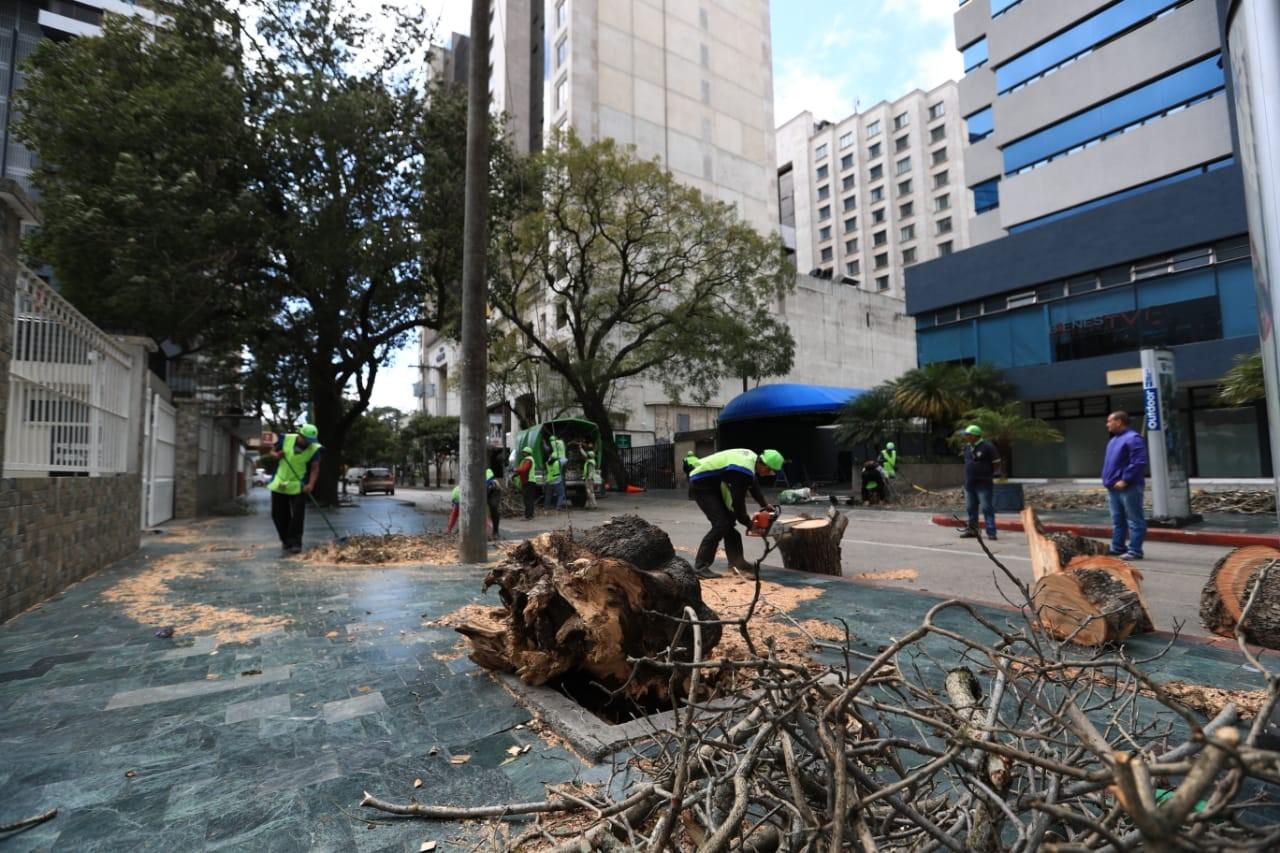 Colaboradores de Limpia y Verde, de la comuna capitalina, retiran las ramas del árbol derribado por el viento en zona 10. (Foto Prensa Libre: Carlos Hernández)