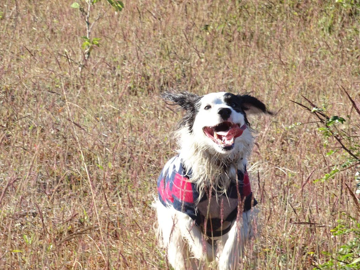 Por su naturaleza, el perro debe socializar con el ser humano y tener actividad física diaria. (Foto Prensa Libre, Marylena Loarca)