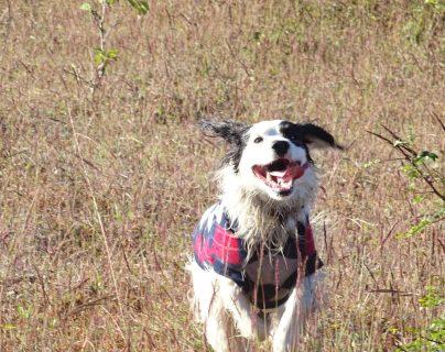 Un perro en libertad es un perro feliz