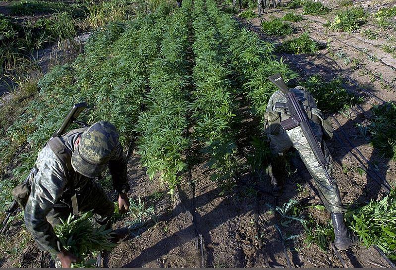 Las montañas de Sinaloa, México, eran propicias para el cultivo de amapola y mariguana. (Foto: Hemeroteca PL)