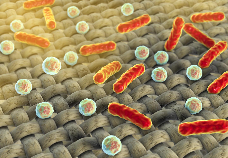 Imagen microscópica de bacterias en la ropa