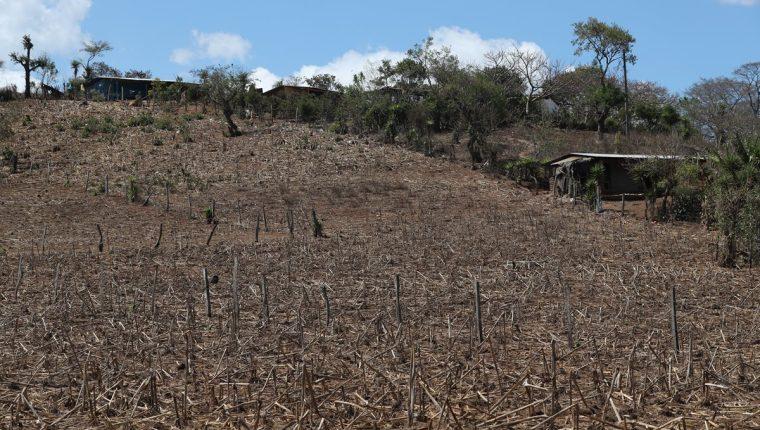 La aldea Valencia, como la mayoría de comunidades en el corredor seco, sufren las consecuencias de la sequía. (Foto Prensa Libre: Esbin García)