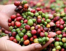 Productos agrícolas como el café, han enfrentado  caía en precios internacionales. (Foto, Prensa Libre: Hemeroteca PL).
