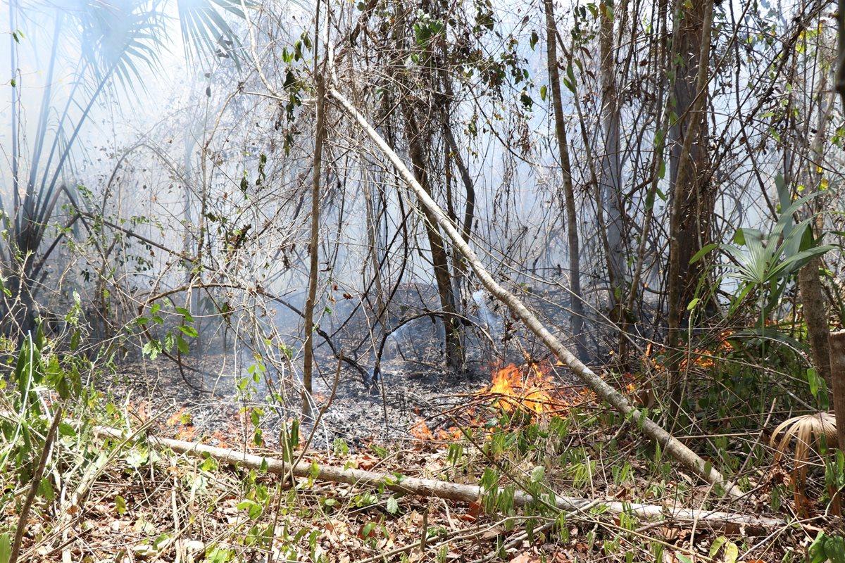 Incendios se reactivan en Reserva de la Biosfera Maya