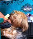 Los Helad Dog tienen una presentación en cono y también en paleta. (Foto Prensa Libre: Infobae)