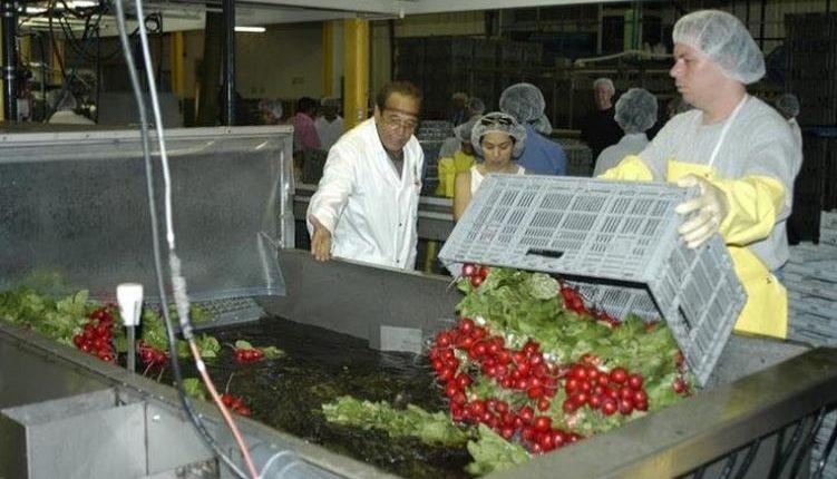 Trabajadores Guatemaltecos participan en el Programa Trabajadores Temporales en Canadá. (Foto Prensa Libre: Hemeroteca)