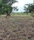 Jutiapa es una de las zonas más afectadas por la sequía, según el Maga. La falta de lluvia perjudicará a miles de agricultores. (Foto Prensa Libre: Óscar González)