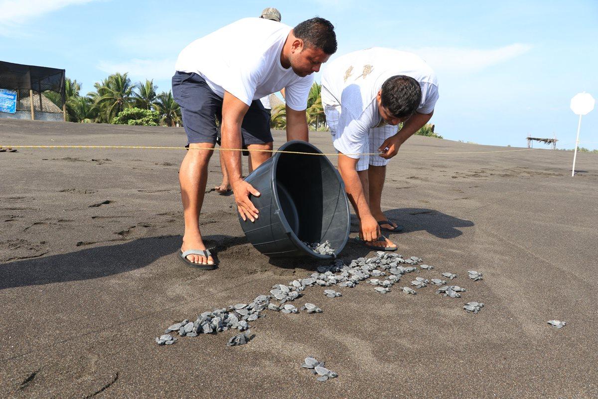Voluntarios liberan tortugas recién nacidas con el propósito de preservar la especie. (Foto Prensa Libre: Enrique Paredes).