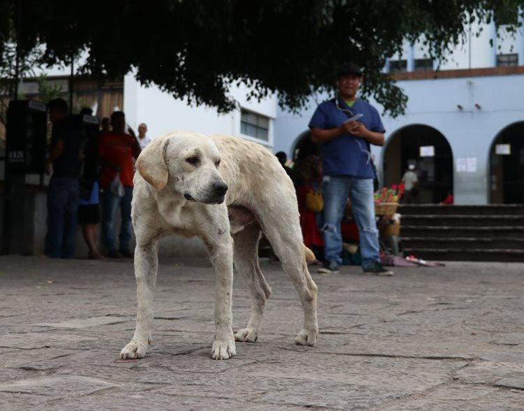 Salud pretende vacunar contra la rabia a más de tres millones de perros