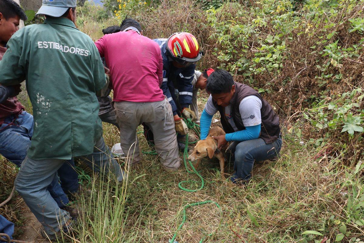 Rescatan a perro que cayó en pozo artesanal en un terreno baldío
