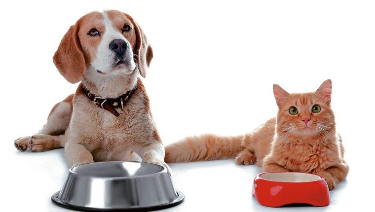 La nutrición adecuada para mis mascotas – Prensa Libre
