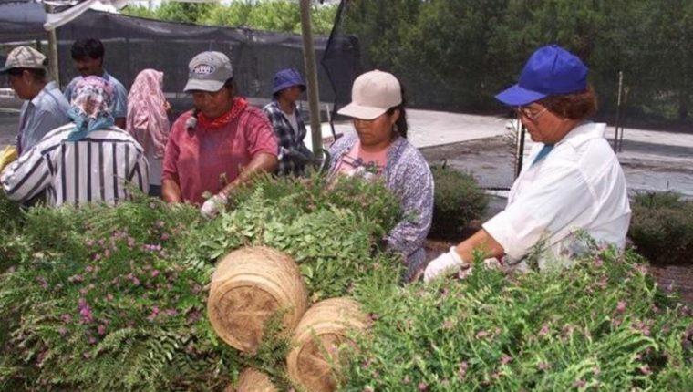 Los migrantes guatemaltecos incrementaron los envíos de dinero durante el 2018 y despacharon US$9 mil 287 millones, informó el Banguat. La mejora en la economía de los Estados Unidos y el campo laboral, motivo el crecimiento. (Foto Prensa Libre: Hemeroteca)