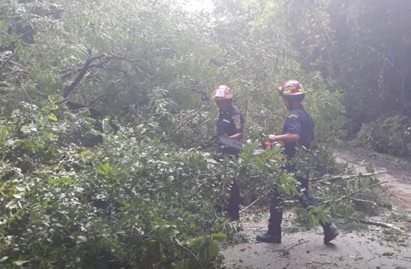El 20 de enero de este año, socorristas de Sayaxché limpian la vía del parque  El Rosario donde un árbol  que cayó obstaculizaba ambos carriles. (Foto Prensa Libre: Cortesía)