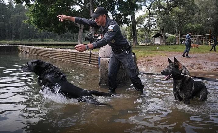 Dos de los agentes caninos durante su tiempo de esparcimiento. (Foto Prensa Libre: Mingob).