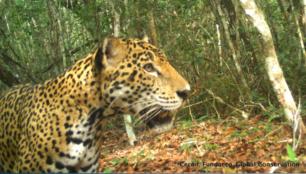 Cámaras captan las maravillas naturales que habitan las selvas peteneras