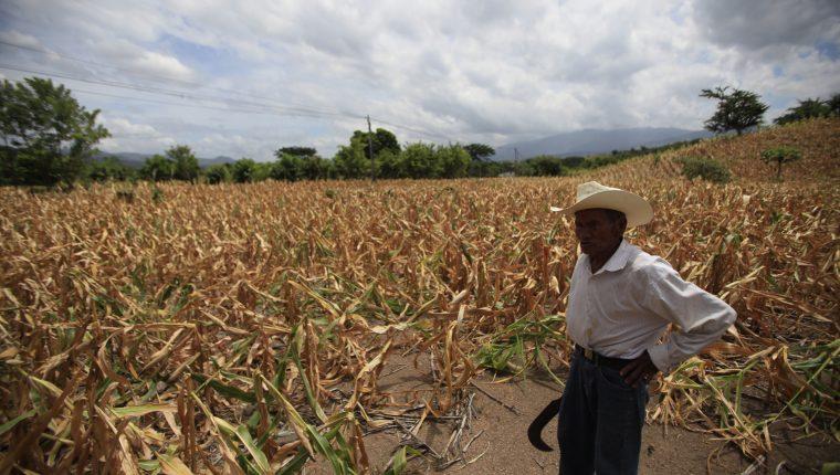 Los agricultores de subsistencia se vieron afectados este año por la sequía. (Foto Prensa Libre: Hemeroteca)