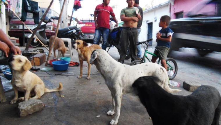 En algunas ciudades es común la proliferación de perros callejeros: (Foto Prensa Libre: Hemeroteca PL).