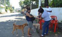 Con las jornadas de castración de pretende controlar la población de perros callejeros. (Foto Prensa Libre: Hemeroteca PL).