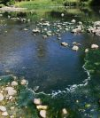 Campesinos aseguran que a simple vista se puede observar el alto grado de contaminación en el río Lempa, causada por el lanzamiento de aguas mieles del café. (Foto Prensa Libre: Mario Morales)