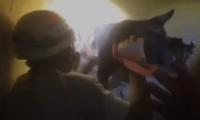 Momento en el que perro fue rescatado por los Bomberos Voluntarios. (Foto Prensa Libre: Imagen tomada de video).