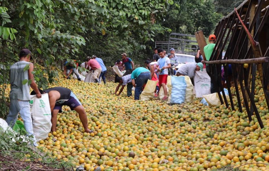 El camión accidentado en Izabal transportaba miles de naranjas. (Foto Prensa Libre: Dony Stewart).