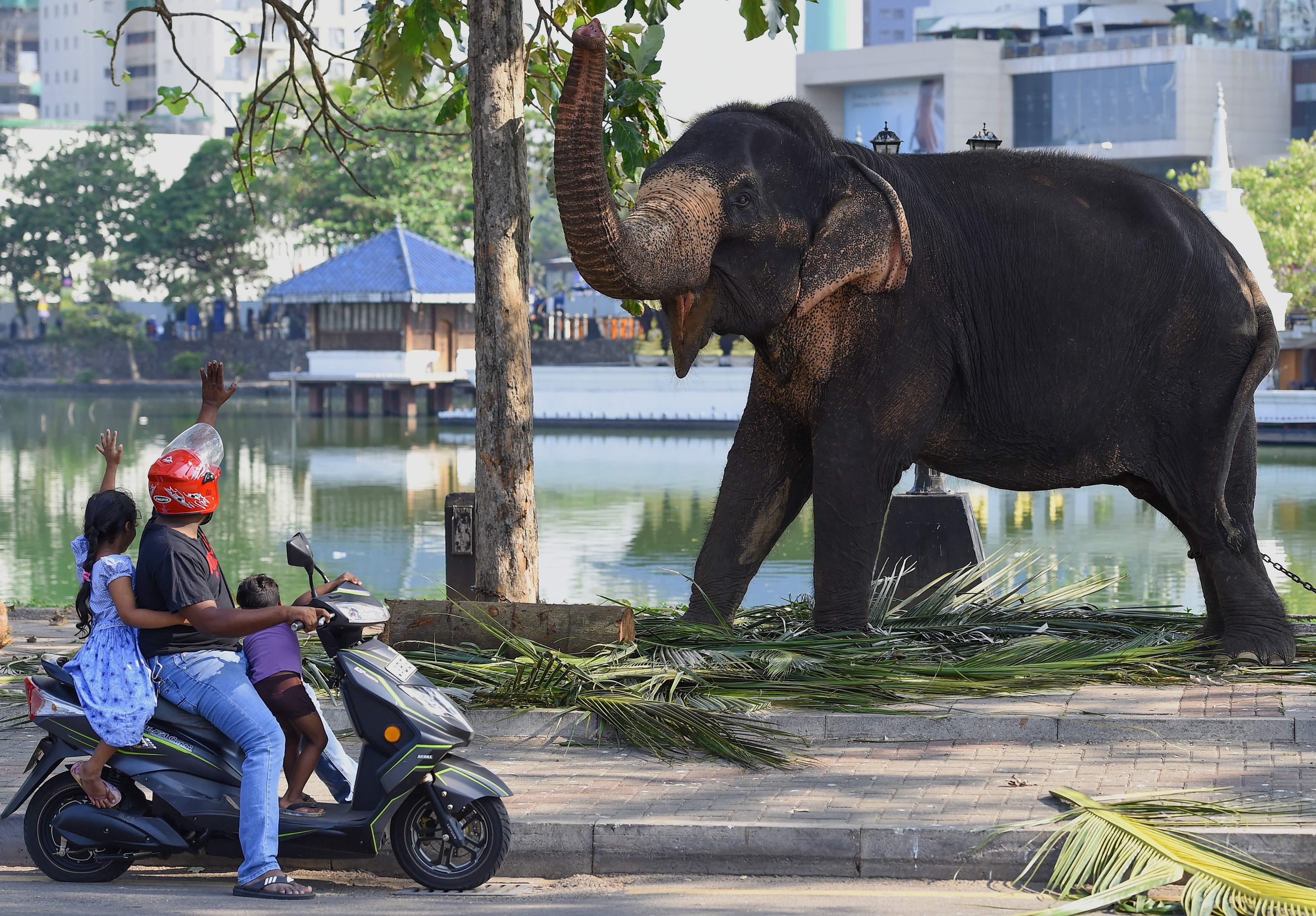 Los viajeros interactúan con un elefante mientras descansa en una vía pública antes del festival anual Perahera del histórico Templo Gangaramaya en Sri Lanka. AFP