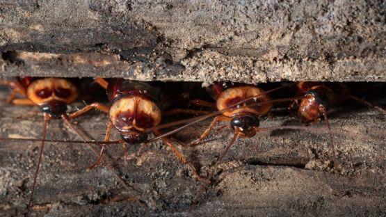Las cucarachas y las moscas caseras pueden proliferar en los próximos años. GETTY IMAGES