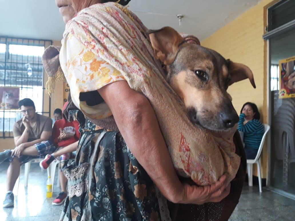 Esto se sabe de la controversia entre médicos veterinarios y organizaciones protectoras por castraciones de perros y gatos a bajo costo