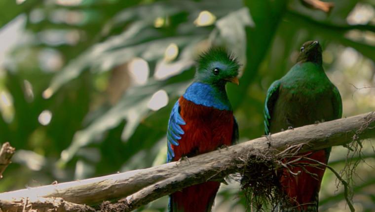 """Guatemalteco presentará el documental """"Serpiente Emplumada"""""""