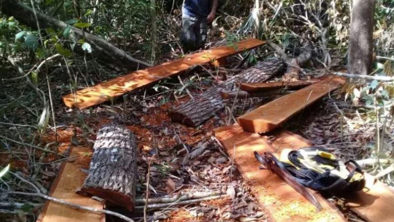 Grupos ecologistas advierten sobre la tala ilegal en México y el paso de leñadores de ese país a Guatemala (Foto Prensa Libre: cortesía FundaEco)