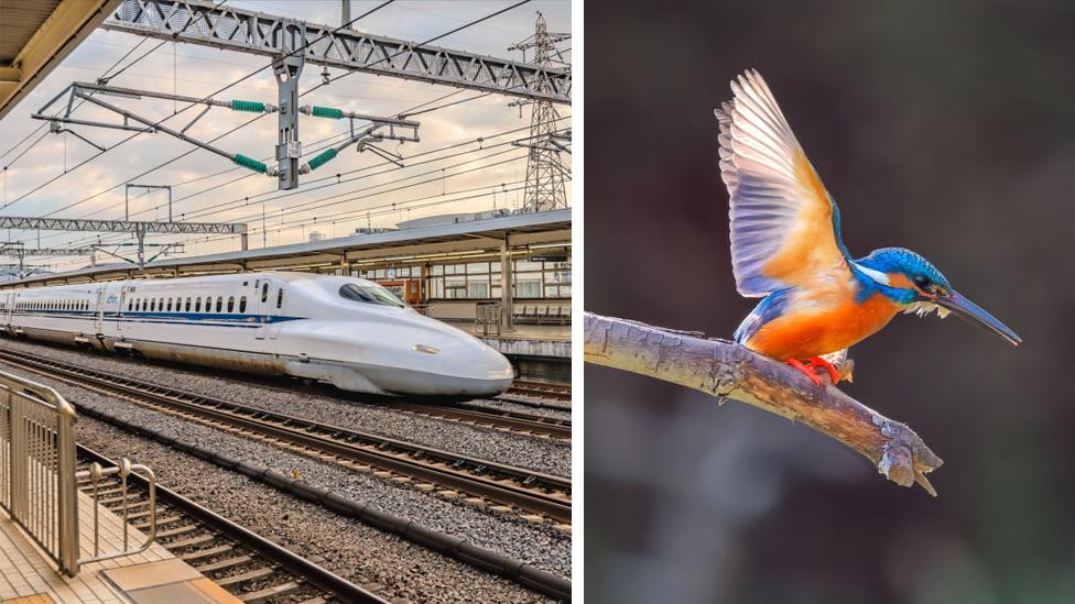 ¿Qué tienen en común el tren bala y el pájaro martín pescador?