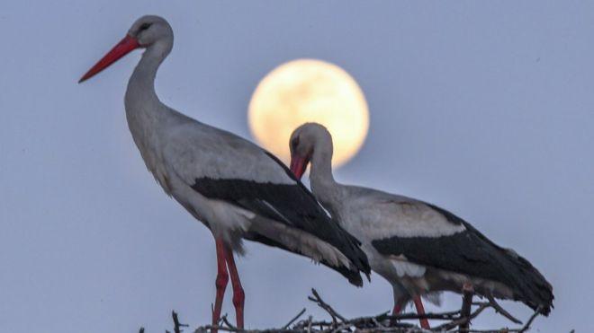 """La """"Luna de Gusano"""" es la tercera superluna de 2019. EPA"""