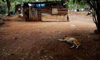 ACOMPAÑA CRÓNICA: GUATEMALA SEQUÍA/ AME2148. MOYUTA (GUATEMALA), 28/03/2019.- Fotografía fechada el 19 de marzo de 2019 que muestra la casa de Rosita y su familia, en la aldea San Andrés de Moyuta (Guatemala). La mujer, de 31 años y tres hijos, lleva toda su vida intentando sobrevivir con lo poco que la tierra produce por las constantes sequías en el llamado Corredor Seco de Guatemala. EFE/ Esteban Biba