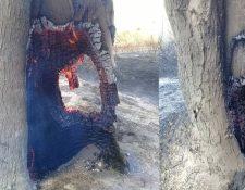 Árboles y vegetación son arrasados por el fuego ante la contante lucha de las brigadas y cuerpos de socorro que trabajan en el lugar. (Foto Prensa Libre: Cortesía)