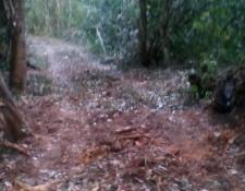 Según el Conap, la imagen muestra residuos de troncos de árboles muertos: (Foto Prensa Libre: Cortesía Conap).