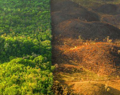 Rainforest Alliance – Sergio Izquierdo.