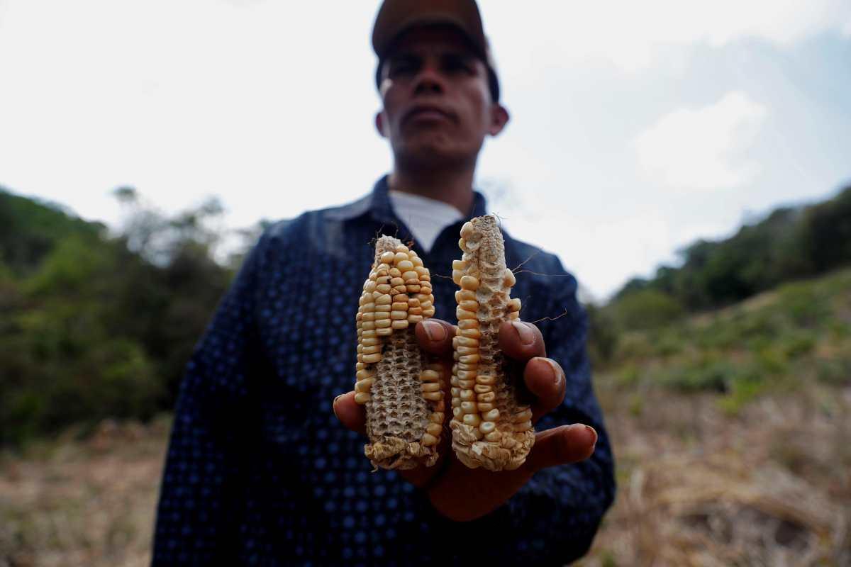 La sequía ahoga en la miseria y el hambre al Corredor Seco del país
