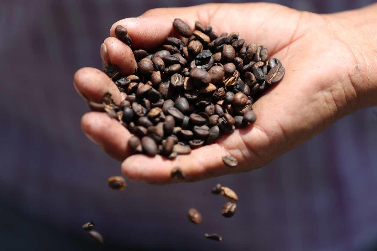 Productores proyectan que precios del café mejorarán para el 2020