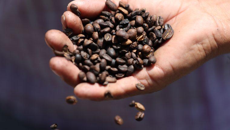 Según productores de café, los precios internacionales ya tocaron fondo y empezará la fase de recuperación que se consolidará en el 2020. (Foto Prensa Libre: Hemeroteca)