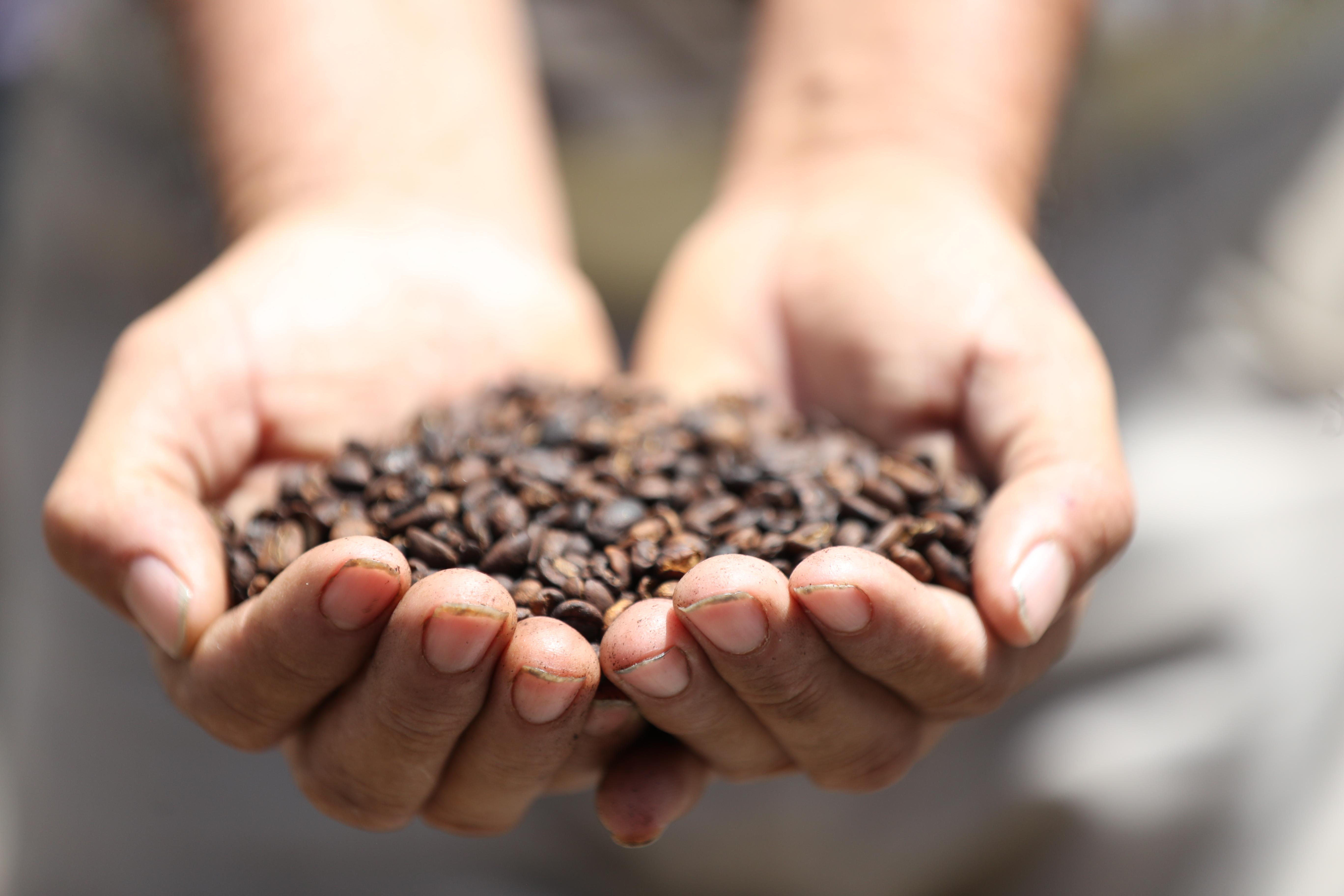 Productores de café piden atención a congresistas