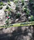 De esta forma intentan proteger a las flores del parque central para que no sean dañadas o hurtadas. (Foto Prensa Libre María Longo)