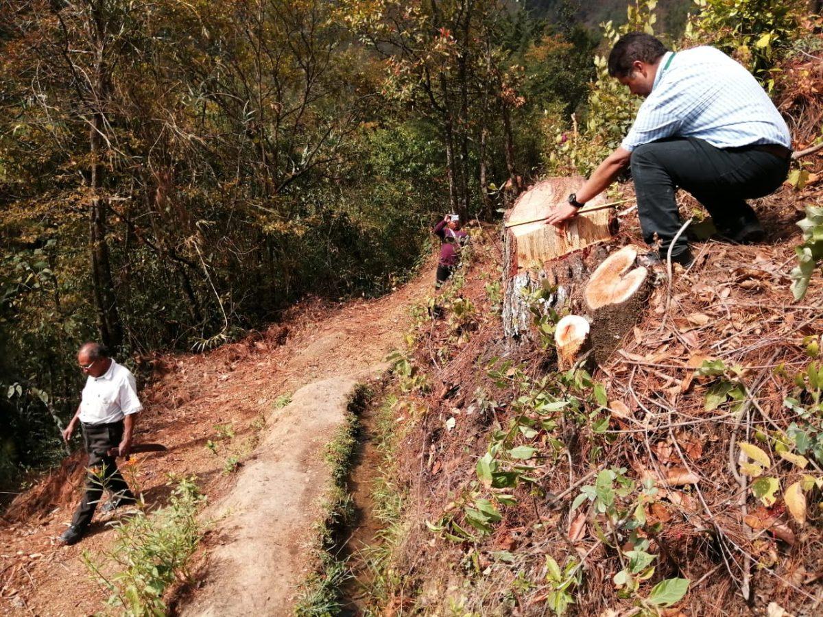Talan de forma ilegal 34 árboles en terreno de cofradía en Quiché