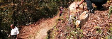 Integrantes  de una cofradía en Quiché interpusieron la denuncia en el MP para que se investigue la tala de 34 árboles.(Foto Prensa Libre: Héctor Cordero)
